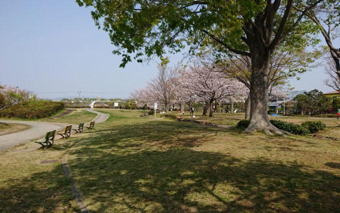 高松公園の芝生で花見