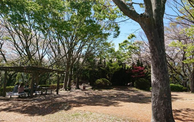 八幡山公園で花見