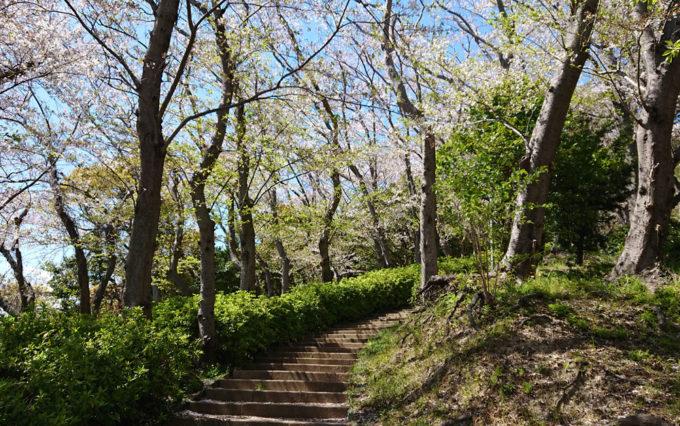 八幡山公園の階段