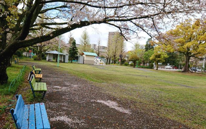 西草深公園と桜